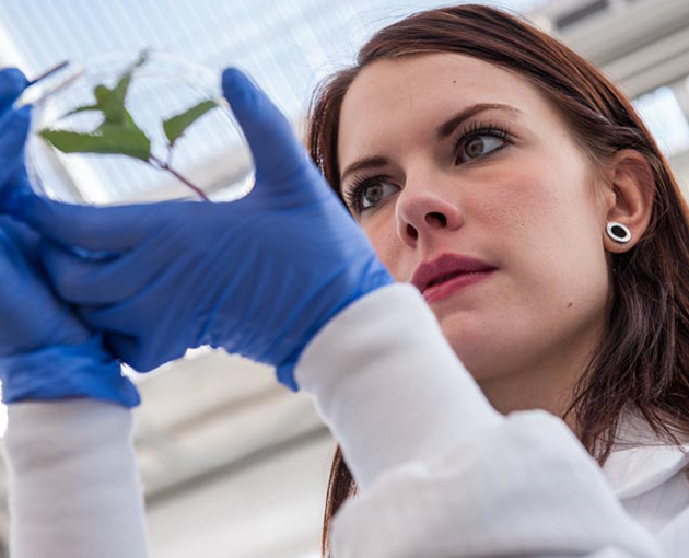 Student studying plant
