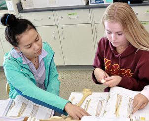 Students working together in anatomy class