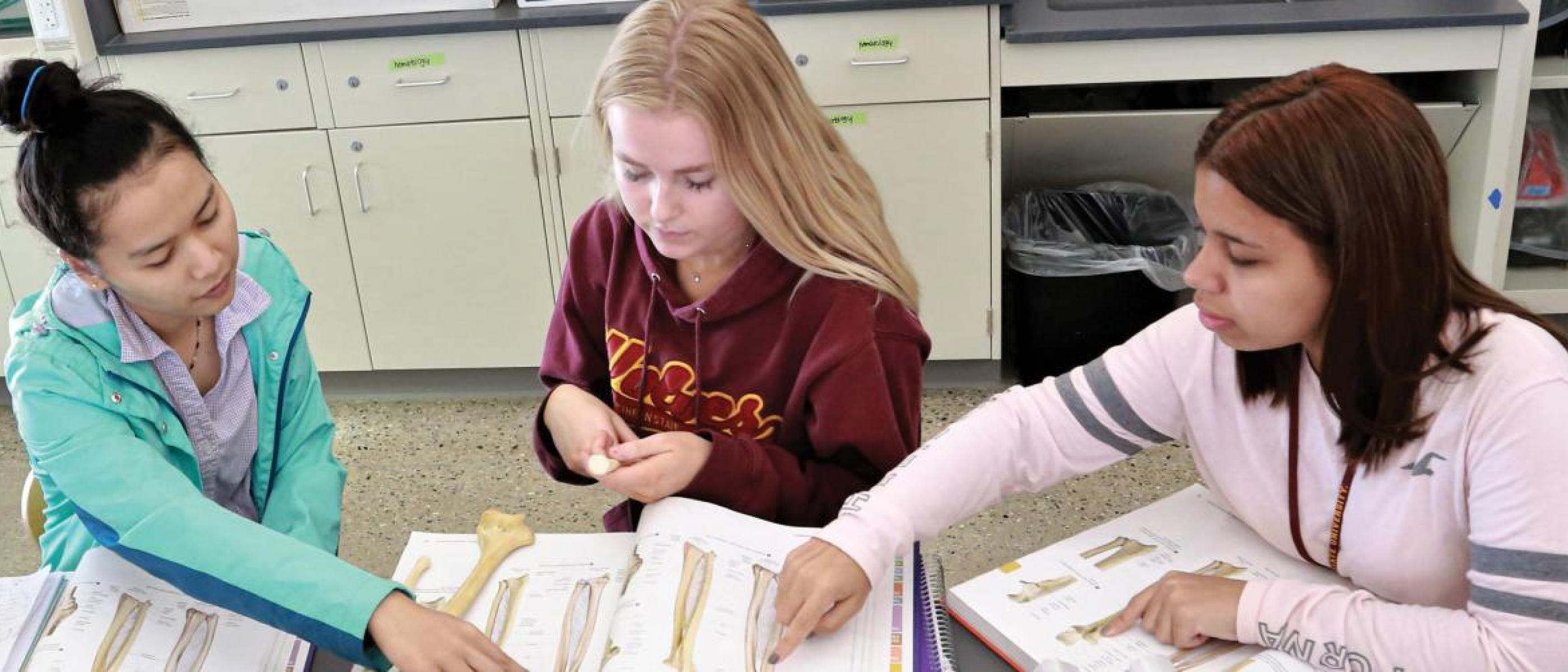 Three students working on anatomy work