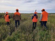 Pheasant hunters out in the field